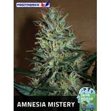 Amnesia Mistery
