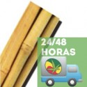 Tutor Bambú 60cm 6/8 (1 ud)