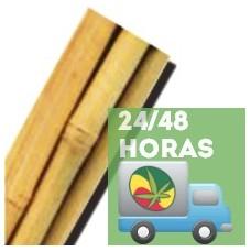 Tutor Bambú 60cm 6/8 (50 Uds.)