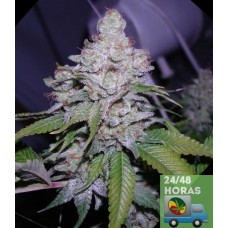 White Berry Fem