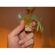Estimuladores de raíz